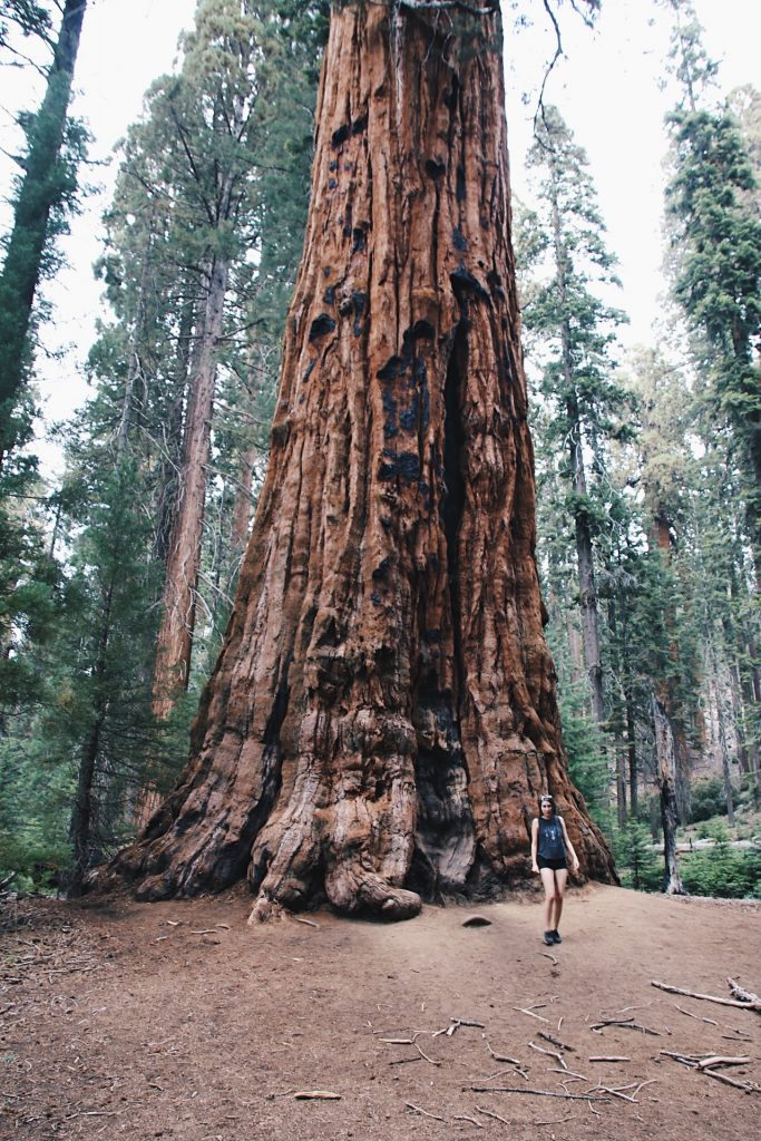 Sequoia National Park, california travel tips