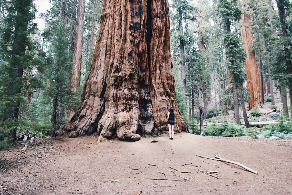 Sequoia National Park, california itinerary
