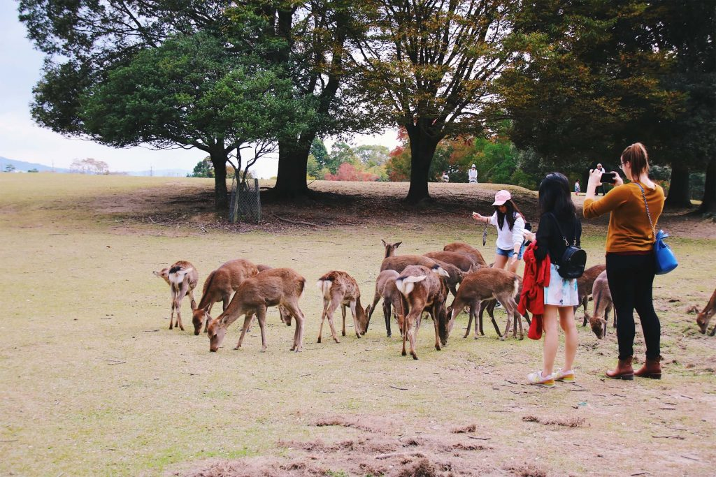 day trip nara, what to do in nara japan
