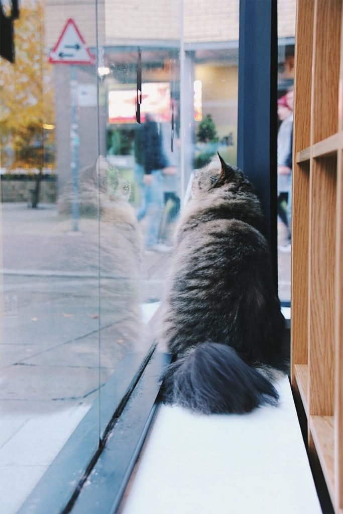 Manchester Cat Cafe, what to see