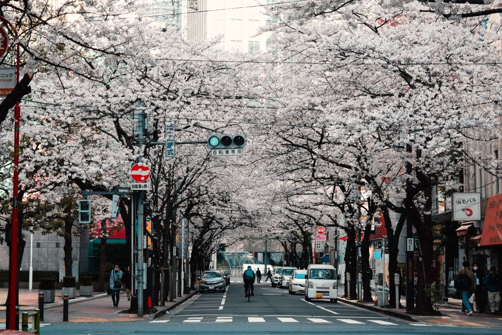 spring in Japan sakura tips