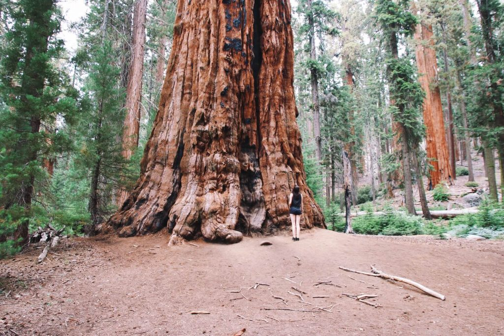 sequoia national park california 10 day itinerary