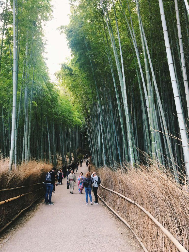 bamboo grove kyoto
