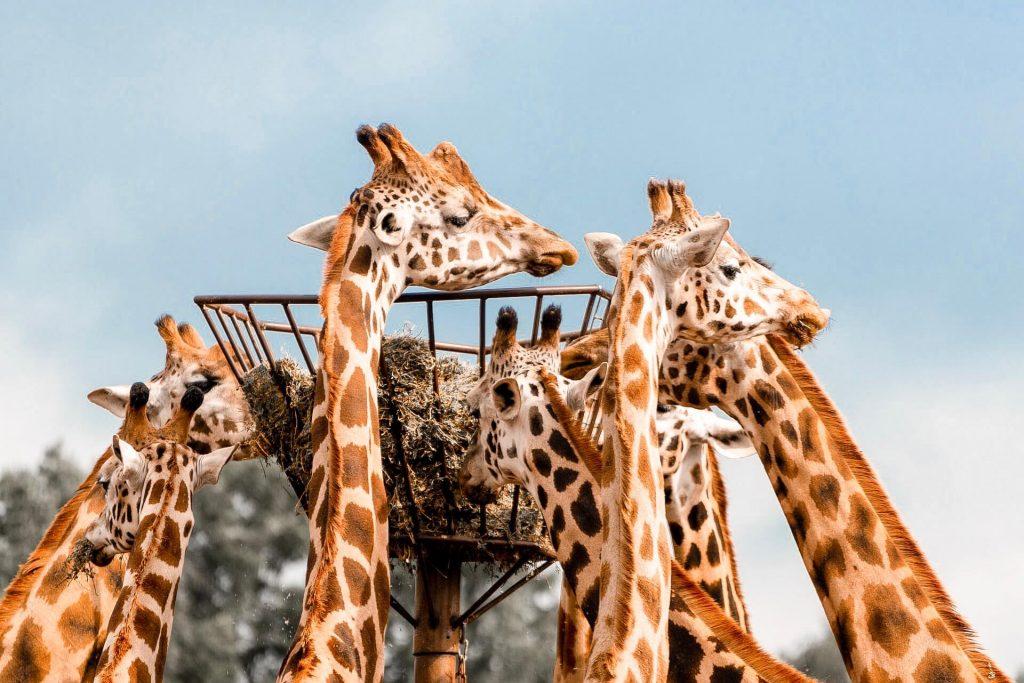 Beekse Bergen Tilburg Netherlands Zoo