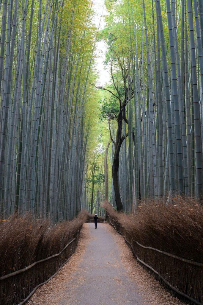 bamboo grove japan